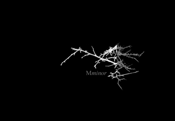 Mminor_header_02